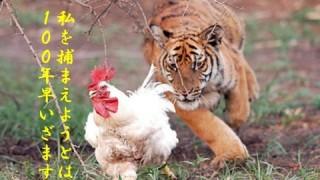 おもしろ動物の吹替え画像特集