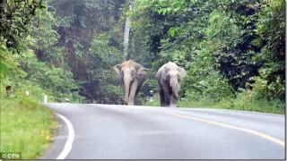 バイク乗ってたら象に怒られたぞう