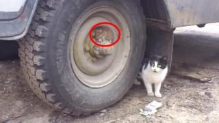 タイヤと同化してるネズミさんが可愛い