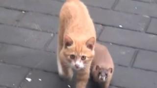 仲が良すぎると話題の猫さんとイタチさん