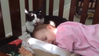 猫さんが赤ちゃんの頭をペロペロしまくります