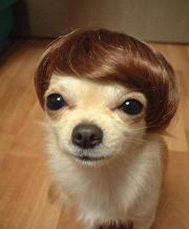 How-my-puppy-hair-style
