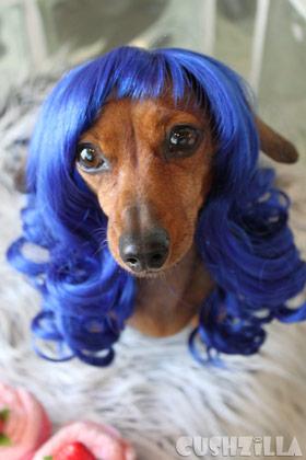 katy-perry-dog-1