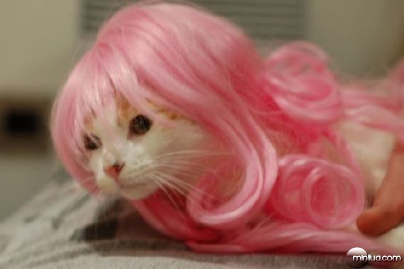 pets-with-wigs32