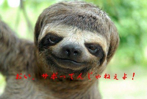 sloths-like-justin-bieber01-480x325
