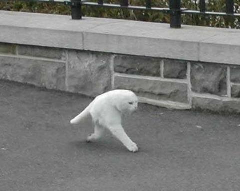 odd_google_street_view_cat