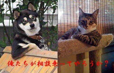cooldogcat