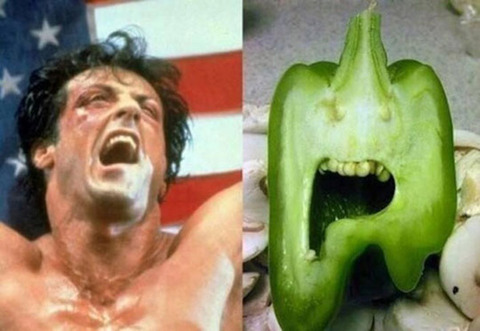 funny-rocky-cucumber-alike-sylvester-stallone1